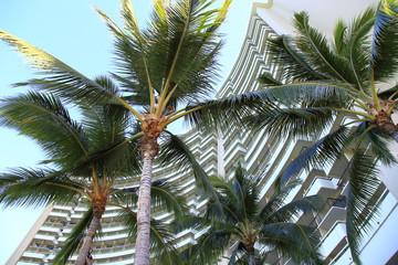 シェラトンワイキキホテルとヤシの木