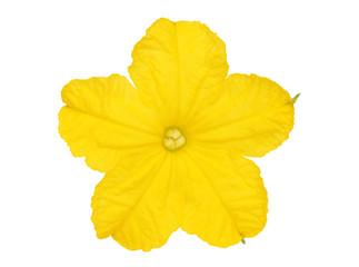 きゅうりの花