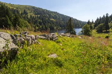 Pré et lac en montagne