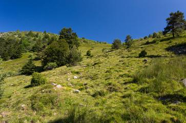 Herbe et versant vers les sommets