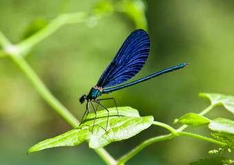 Damselfly on green plant with green background.