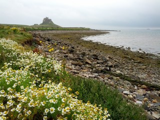Northumberland coast Holy Island