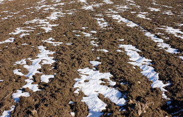 Plowed field under the melting snow
