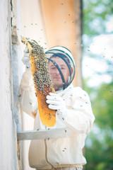 beehive beekeeper inspects