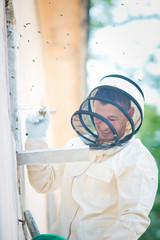 beehive beekeeper inspects