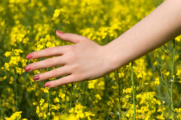 Woman hand over yellow flower field