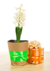 Hyacinth with gift box on table