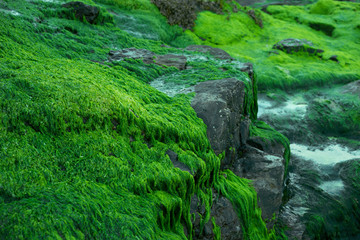 Seaweed covering rocks at the seaside