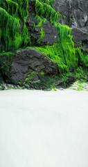 Seaweed growing on the rocks at the beach