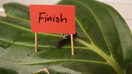 snail crawling over finish line