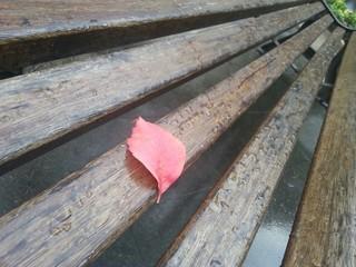 Solitudine d'autunno