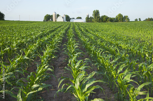 Field of young corn with farm in background