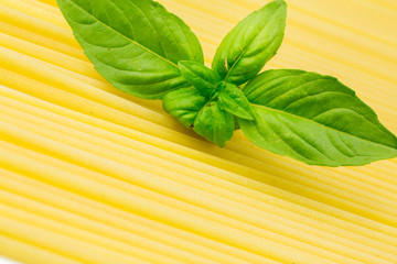 Spaghetti with basil leaf