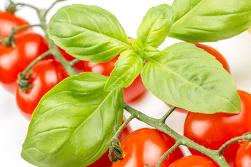 Cherry tomatoes on the vine with basil