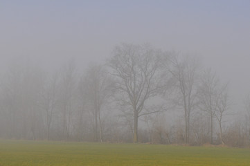 Fog in field at dawn