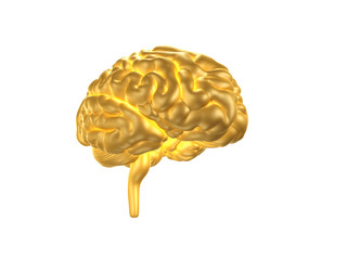 Golden Human Brain