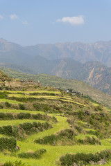 Lush green terraced mountain fields
