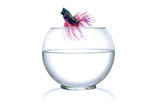 Runaway a  Fighting Fish jumping out of fishbowl  on white poster