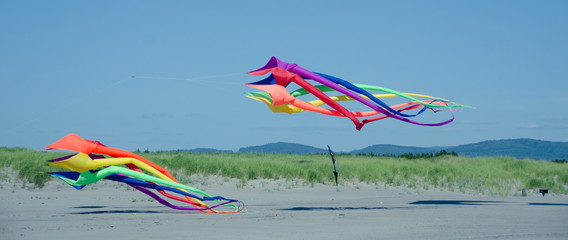 Two giant kites landing at Long Beach, WA