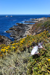 Landscape with flower and Pacific Ocean at Garrapata State Park