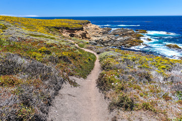 Hiking path in Garrapata State Park by Pacific