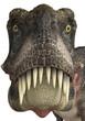 tarbosaurus face