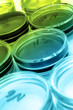 Color liquid in old plastic petri dishes - 66842209