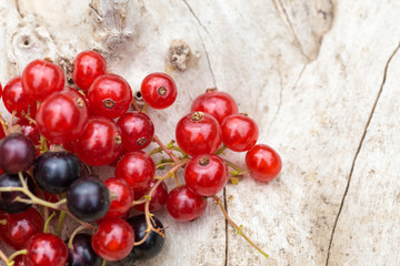 Frisch geerntete schwarze und rote Johannisbeeren