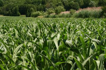 Landwirtschaft nahe Stuttgart