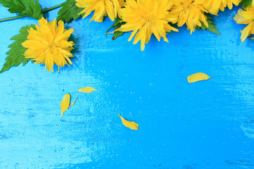 Yellow dandelion on blue wooden background