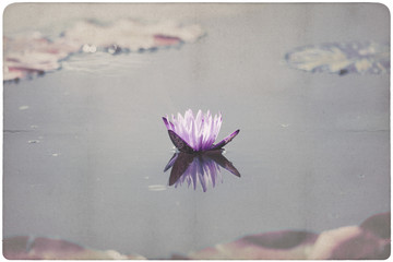 Water Lily paper background