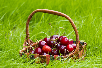 cherries in a basket in summer grass