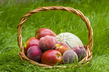 fruits in a basket in summer grass
