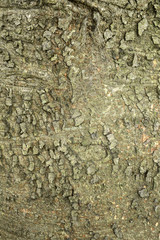 texture of brown tree bark