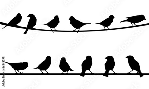 birds - 66849299