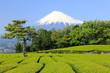 富士と新茶畑