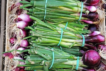 Bunches of red onions © Arena Photo UK