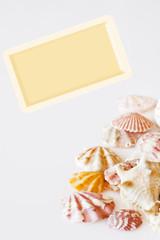 Tarjeta postal con conchas marinas.