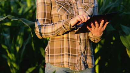 Woman agronomist using tablet computer in corn field.