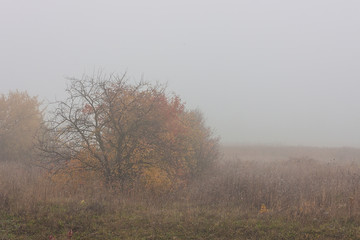 Morning autumn landscape meadows forests in the fog