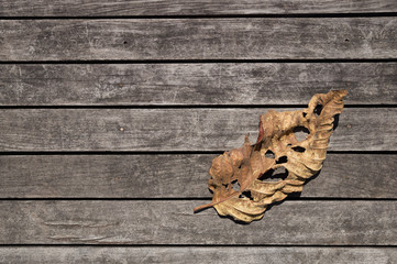 leaf on Wooden Background