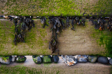 Groynes, With Seaweed and Stones