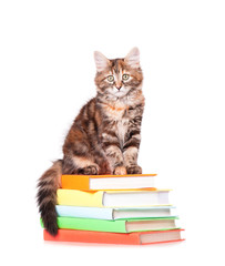 Kitten with books