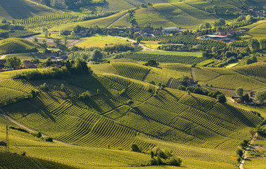 Green hills and vineyards of Piedmont in early morning in Italy.