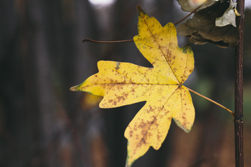 yellow leaf on the tree
