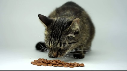 Domestic cat eating dry food. Tabby cat eating pet food.