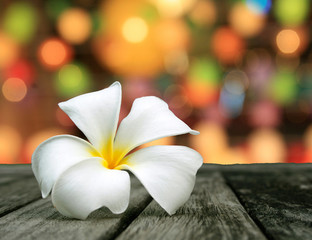 white frangipani and multicolored defocused bokeh lights backgro