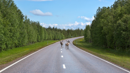 Two deer run on the road