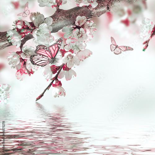 Fotobehang Kersen Apricot flowers in spring, floral background
