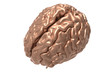 brain with clipping mask